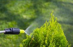 De tuinman bestrooit jonge pruimboom van ongedierte en ziekten met flessenspuitbus Hij houdt spuitbus in zijn hand royalty-vrije stock afbeelding