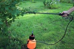 De tuinman bestrooit kersenboom tegen ongedierte en ziekten het gebruiken stock afbeeldingen