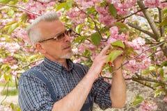 De tuinman bevindt zich op de achtergrond van een bloeiende boom, bekijkend de bloemen stock afbeeldingen