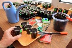 De tuinman houdt container met grond in zijn hand voor het zaaien van groentenzaden met de hulpmiddelen van de gebruikstuin stock foto's