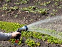 De tuinman houdt een van de irrigatieslang en nevel water in de tuin Royalty-vrije Stock Foto's