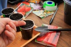 De tuinman houdt zaad van peper in zijn hand voor het zaaien in containers met de hulpmiddelen van de gebruikstuin close-up Royalty-vrije Stock Foto's