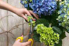 De tuinman maakt een boeket van serrebloemen royalty-vrije stock fotografie