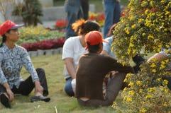 De tuinman rest-chrysant toont Stock Foto's