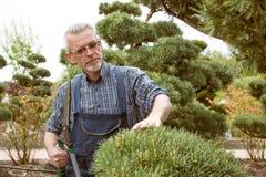 De tuinman snijdt een decoratieve struikschaar royalty-vrije stock fotografie