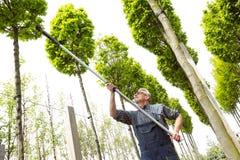 De tuinman snijdt de lange bomen royalty-vrije stock fotografie