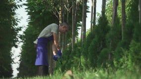 De tuinman snijdt struiken in de tuin stock video