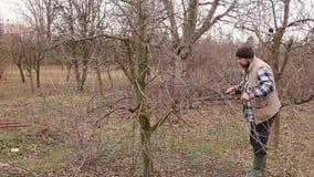 De tuinman snijdt takken, snoeiend fruitbomen met lange scharen in de boomgaard stock footage