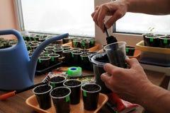 De tuinman zet grond door tuinhulpmiddel in container voor het zaaien van zaden Stock Afbeeldingen