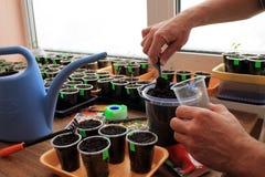 De tuinman zet grond door tuinhulpmiddel in container voor het zaaien van zaden Royalty-vrije Stock Foto's
