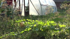 De tuinmanmens trekt water met gieter van bassin en waterplanten 4K stock footage