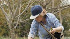De tuinmanvrouw die tuinschaar voor knipseljongelui met behulp van schiet installaties in de lentetuin stock video