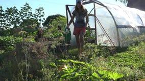 De tuinmanvrouw trekt water met gieter van bassin en waterplanten dichtbij broeikas in tuin 4K stock video