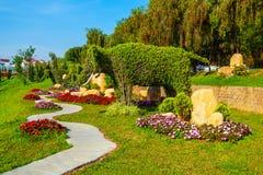 De Tuinpark van de Dalatbloem, Vietnam Stock Fotografie