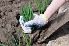 De tuinwerken Het tuinieren Royalty-vrije Stock Afbeelding