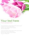De tulp bloeit prentbriefkaarconcept Stock Foto