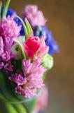 De tulp van de de lentebloem in zachte boeketmacro Royalty-vrije Stock Afbeeldingen