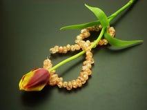 De tulp van de lente stock foto