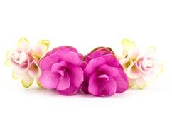 De tulp van Siam of Kurkumabloem Stock Afbeeldingen