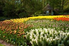 De tulpen in bloem Keukenhof tuinieren in Lisse Stock Foto's