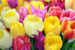 De tulpen sluiten omhoog boeket Schoonheidsbloem Colorfull stock fotografie