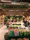 De Tulpen van Amsterdam stock afbeeldingen