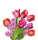 De tulpen van bloemen Royalty-vrije Stock Afbeeldingen