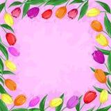 De tulpen van bloemen op een roze Stock Afbeeldingen