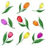 De tulpen van de bloem, reeks Royalty-vrije Stock Fotografie