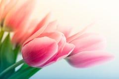 De Tulpen van de lente Stock Foto