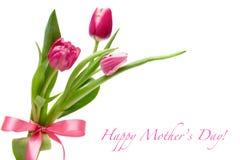 De tulpen van de lente met een roze boog Stock Foto's