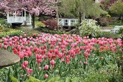 De Tulpen van de tuin Stock Afbeeldingen