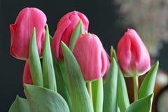 De Tulpen van de valentijnskaart Stock Afbeelding