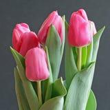 De Tulpen van de valentijnskaart Royalty-vrije Stock Foto