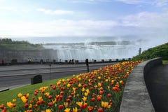 De Tulpen van het Niagara Falls Royalty-vrije Stock Foto's
