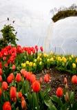De Tulpen van het Project van Eden stock afbeeldingen