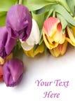 De tulpen van Pasen van het boeket als grens Royalty-vrije Stock Afbeelding