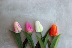 De tulpen vervormen concerte achtergrond met exemplaarruimte voor bericht De achtergrond van de moeder` s Dag Hoogste mening Royalty-vrije Stock Foto