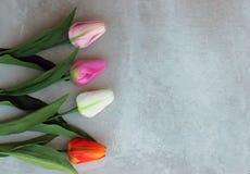 De tulpen vervormen concerte achtergrond met exemplaarruimte voor bericht De achtergrond van de moeder` s Dag Hoogste mening Stock Afbeeldingen