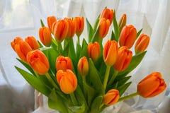 De tulpen zijn heldere oranjerood stock foto