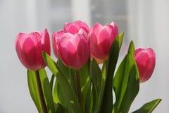 De tulpenboeket van de de lentebloem Stock Foto's