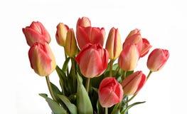 De tulpenboeket van de de lentebloem op 17 April 2015 wordt geïsoleerd die Stock Fotografie
