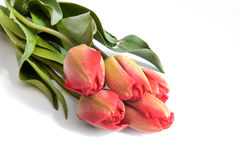 De tulpenboeket van de de lentebloem op 17 April 2015 wordt geïsoleerd die Stock Afbeeldingen