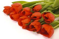 De tulpenbos van Pasen Stock Afbeeldingen