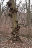De tumorous bomen royalty-vrije stock foto