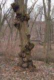 De tumorous träden Royaltyfri Foto