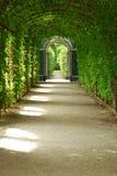 De tunnel van de vegetatie Stock Foto's