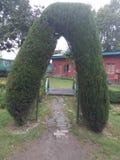 De twee bomen zijn als poort Stock Foto