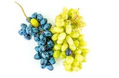De twee druivenverscheidenheden Stock Afbeeldingen