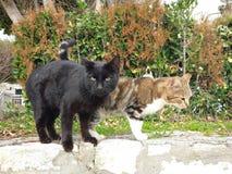 De twee katten zijn zeer comfortabel stock fotografie